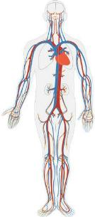 HOW MASSAGE CAN SUPPORT YOUR CIRCULATORY SYSTEMS